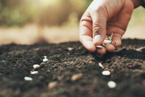 AJ Dahiya - Planting seeds or stones